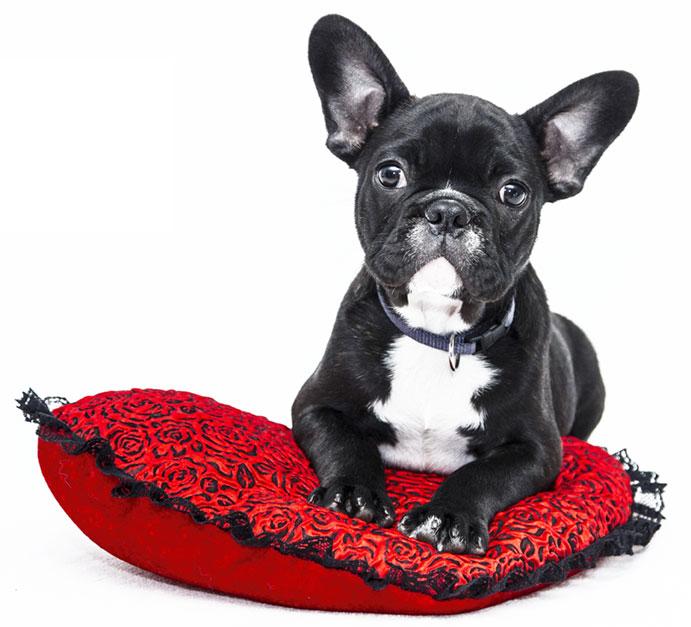 tierarzt hund reinfeld
